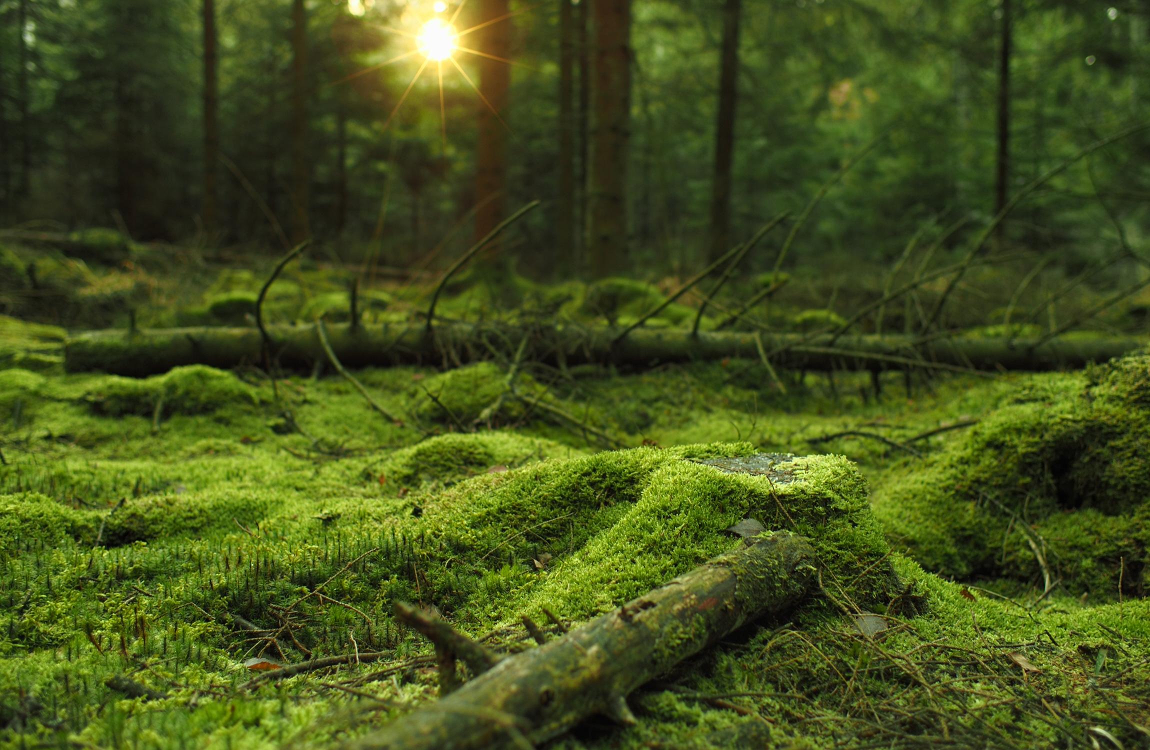 Forest Fire Prevention System Multi Hybrid Innovation